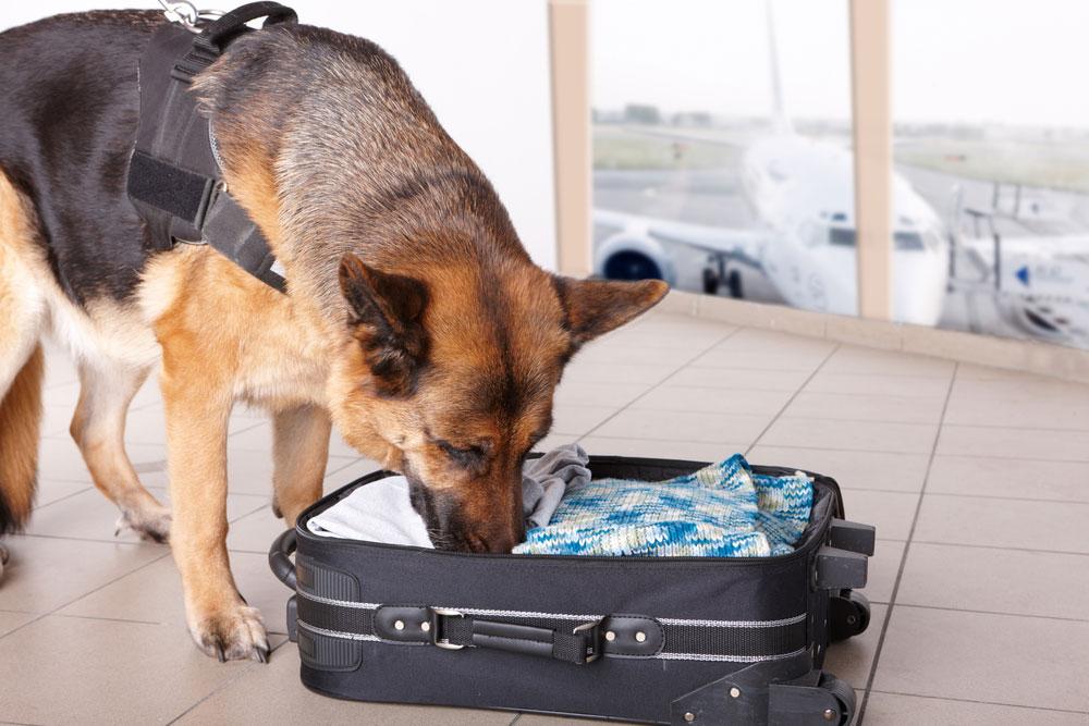 Hund am Flughafen